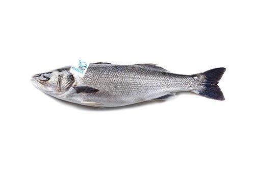 lavraki fishfromgreece