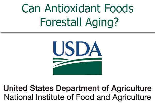 Antioxidant Foods Forestall Aging