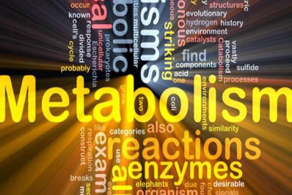 gia na gnwrisoume metabolismo