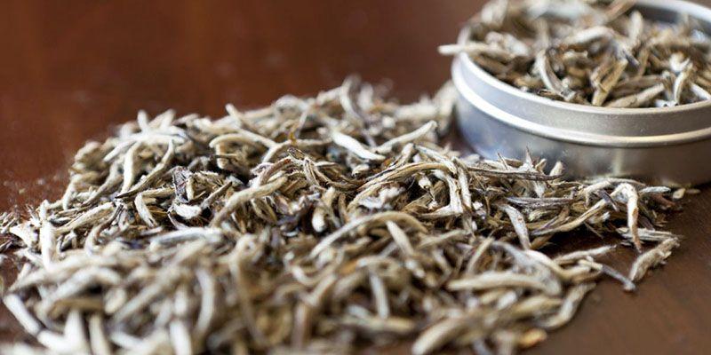 Το λευκό τσάι μπορεί να εμποδίσει την εξάπλωση των καρκινικών κυττάρων