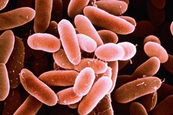 listeria monocytogenes se thalassina proionta diatrofis