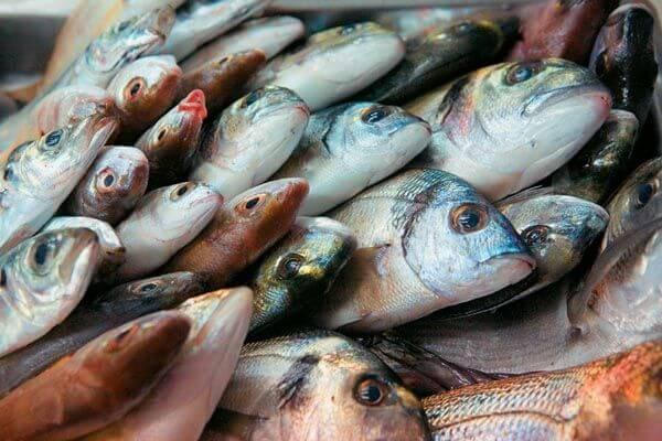 Οδηγίες υγιεινής ψαριών και θαλασσινών | Πώς να ξεχωρίσετε τα φρέσκα;